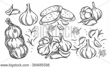 Garlic Outline Drawn Monochrome Icon Set. Pile Of Garlic Bulbs, In Net Bag And Runchy Garlic Bread.