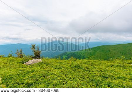 Alpine Meadows Of Mnt. Runa, Ukraine. Row Of Trees On The Hill. Beautiful Nature Scenery Of Carpathi