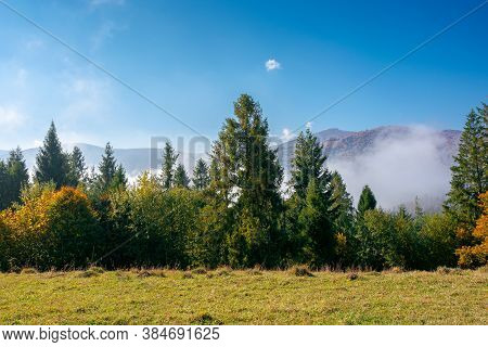 Foggy Autumn Landscape. Spruce Trees On The Meadow. Mountain Behind The Morning Mist. Cloud Inversio