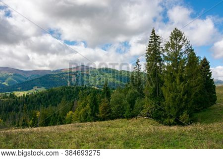 Spruce Forest On The Meadow In Mountains. Autumn Weather With Clouds On The Sky. Beautiful Carpathia