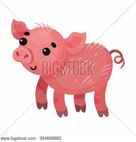 Pink Pig With Curly Tail As Farm Animal Vector Illustration