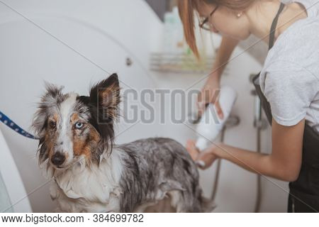 Rear View Shot Of A Female Groomer Working At Her Salon, Washing Cute Little Dog In A Bath. Woman Us
