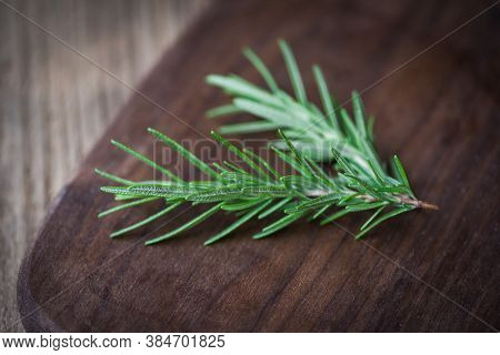 Rosemary Herb On Wooden Cutting Board / Green Rosemary Plant
