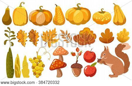 Set Of Pumpkins, Leaves, Bushes, Mushrooms, Acorn, Grapes, Apples And A Squirrel. Autumn Thematics