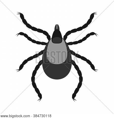 Mite Parasites. Insect Icon Isolated. Black Silhouette Of Mite. Vector Illustration. Mite Icon In Fl