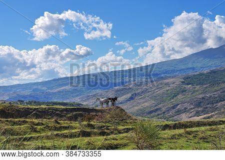 Idyllic Tuscan Landscape Near Siena With Grazing Horse And Donkeys, Italy