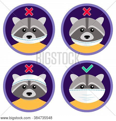 The Cute Raccoon Shows How To Wear Face Mask Properly. Wrong And Right Ways To Use Medical Protectiv