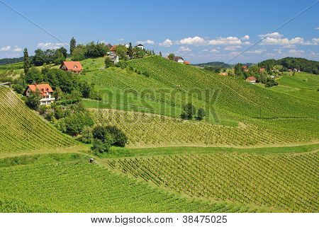 landscape in Styria near Leutschach with Vineyards called Styrian Tuscany,Styria,Austria poster