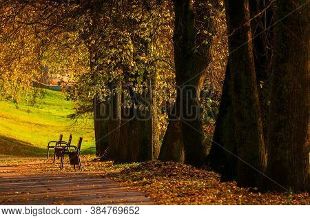 Autumn landscape. Autumn city park, benches under the yellow autumn trees. Focus at the benches. Autumn park in picturesque tones. Autumn landscape, city autumn view, colorful autumn nature