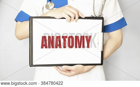Doctor Holding A Card With Text Anatomy, Medical Concept