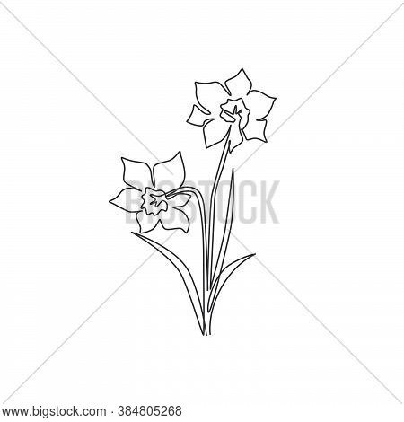 One Single Line Drawing Of Beauty Fresh Narcissus For Garden Logo. Printable Decorative Daffodil Flo