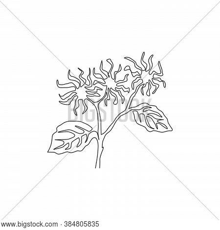 Single One Line Drawing Beauty Fresh Witch Hazels For Garden Logo. Decorative Of Winterbloom Flower