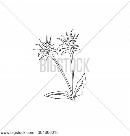 One Continuous Line Drawing Beauty Fresh Bergamot Monarda For Home Decor Wall Art Poster Print. Deco