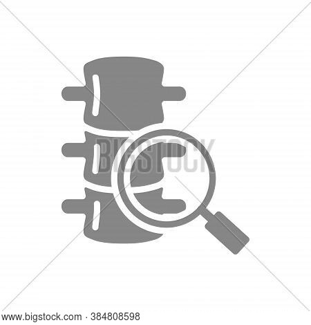 Spine With Magnifying Glass Grey Icon. Vertebrae Research Symbol