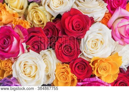 Rose Flower Background. Colorful Roses Flower Pattern. Roses Flower Bouquet. Garden Rose. Red Rose.