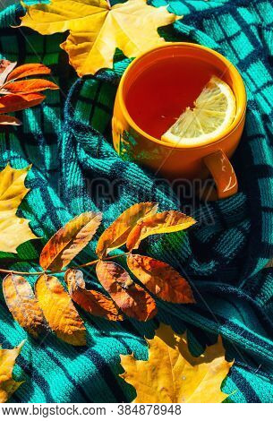 Autumn background - cup of tea, warm scarf and dry autumn leaves under soft sunlight. Concept of spending autumn time at cozy home. Autumn still life, autumn composition. Autumn background