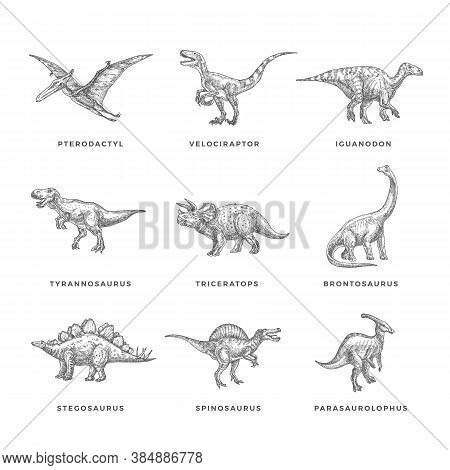Prehistoric Dinosaurs Sketch Signs, Symbols Or Illustrations Set. Hand Drawn Vector Ancient Reptiles