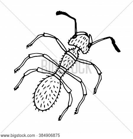 Graphic Black And White Little Ant. Hand Drawn Contour Lines And Strokes. Isolated On White.