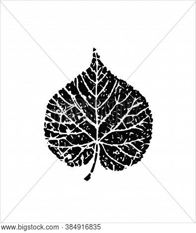 Black Vector Leaf Logo Icon Sign Silhouette Drawing Illustration Isolated On White Background .birch