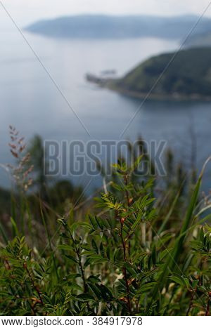 Green Grass, Top View Of Forest Mountains Near Bay Of Blue Lake Baikal The Mouth Of Angara River Fro