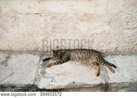 The Gray Cat Slumbers On A Ledge Against The Wall, Stretched Out To Its Full Height.