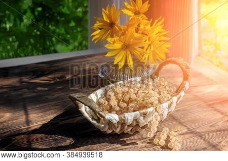White Currants In A Wicker Basket On A Wooden Rustic Table. White Currant Harvest, Still Life With B