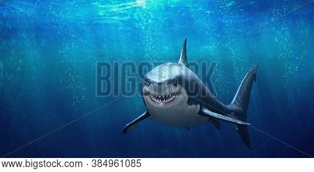 Great White Shark In Blue Ocean , Underwater Scene Of Great White Shark
