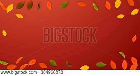 Falling Autumn Leaves. Red, Yellow, Green, Brown Neat Leaves Flying. Vignette Colorful Foliage On Em