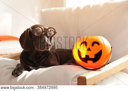 Adorable German Shorthaired Pointer Dog In Funny Glasses With Halloween Trick Or Treat Bucket On Arm