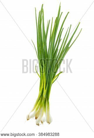 Isolated Scallion Or Green Onion Or Spring Onion On White Background.