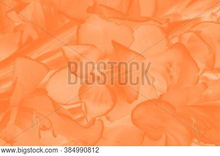 Trendy Color Amberglow Gradient Background. Gladiolus Flower Pattern