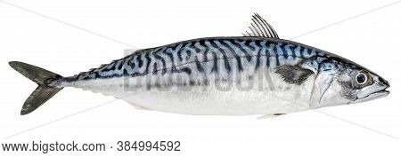 Mackerel Fish Isolated On White Background. Fresh Seafood