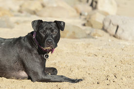 Dog Laying On Sand