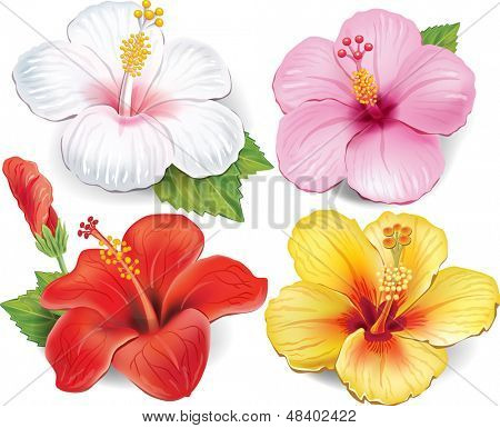 Set of Hibiscus