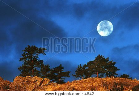 Moon And Two Trees