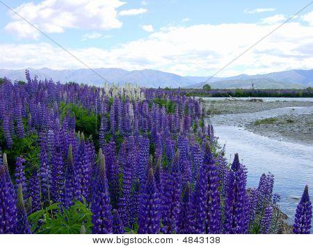New Zealand Water Plants
