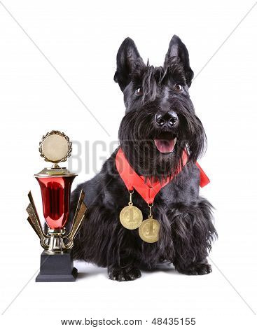 Scotch Terrier With Golg Cup