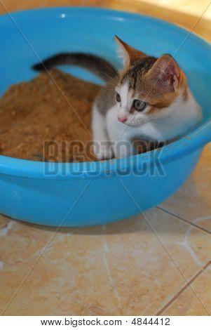 Baby Kitten Potty Training