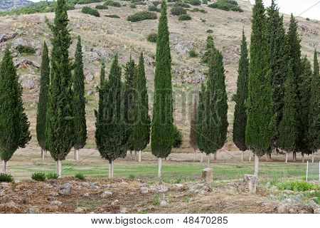 Idyllic landscape with green cypress, Tuscany, Italy