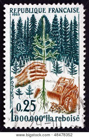 Postage Stamp France 1965 Planting Seedling