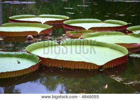 Royal Water Platter On The Pond
