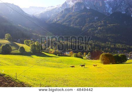 Italian Alps And Horses
