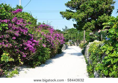 Flowered Street In Japan