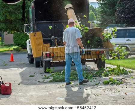 A Man Putting Branches In A Wood Chipper