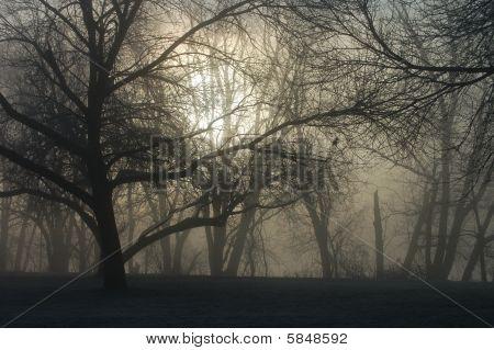 Erie Freezing Fog