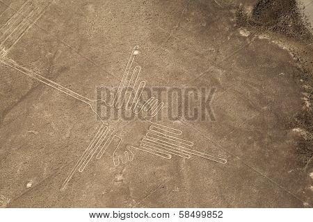 Nazca Lines - Hummingbird