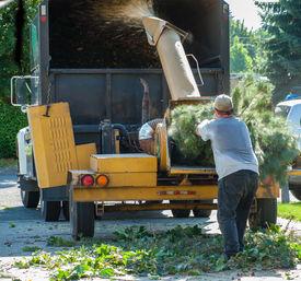 Wood Chipper Shredding A Tree Into A Truck
