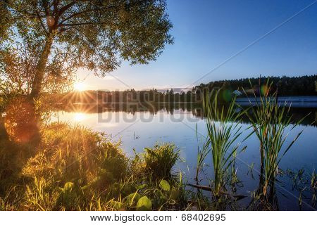 Summer Landscape With Lake And Tree.