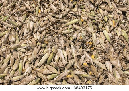 Heap Of Moldy And Rotten Corns