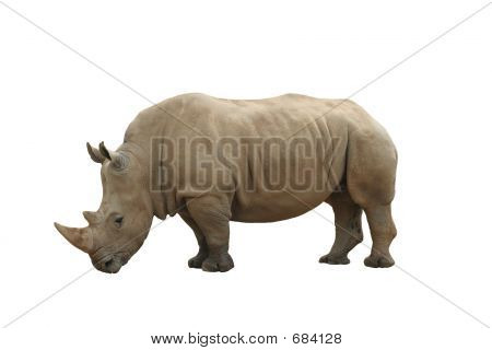 Rhinoceros isolated on white background poster